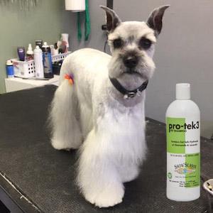Fabulous Flea Bath Soggy Doggies Grooming Colorado Springs
